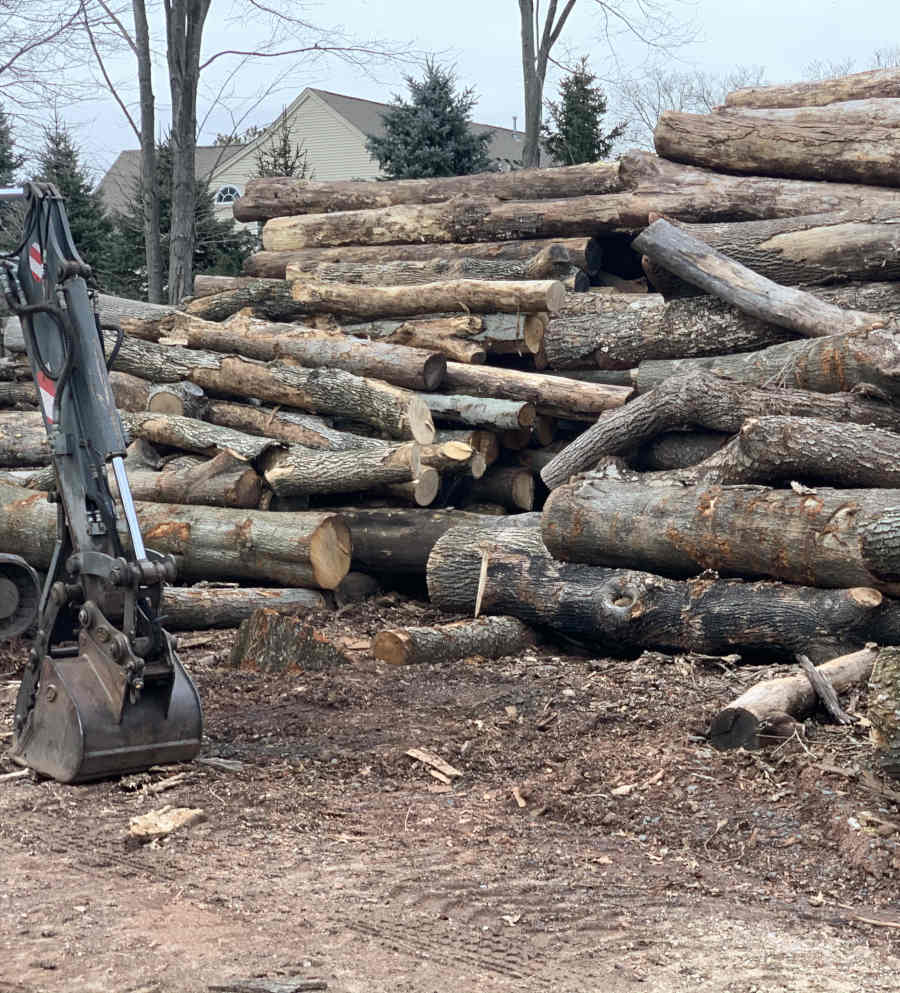 Large pile of logs stacked together