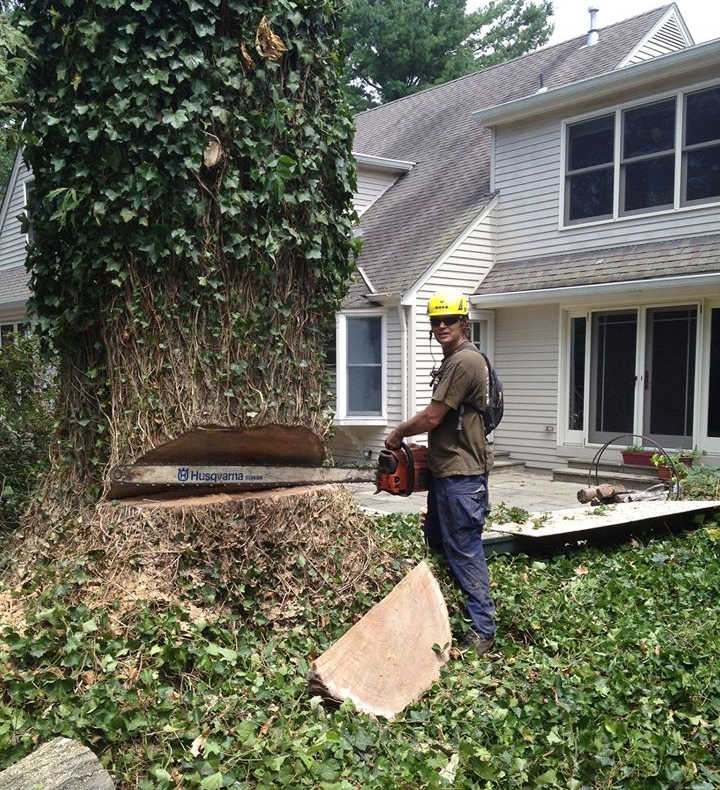 Large Tree Removal in Somerset New Jersey