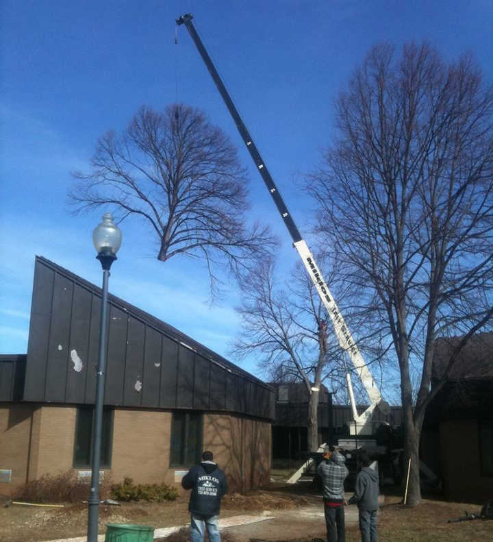Crane lifting tree over building in Somerset, New Jersey