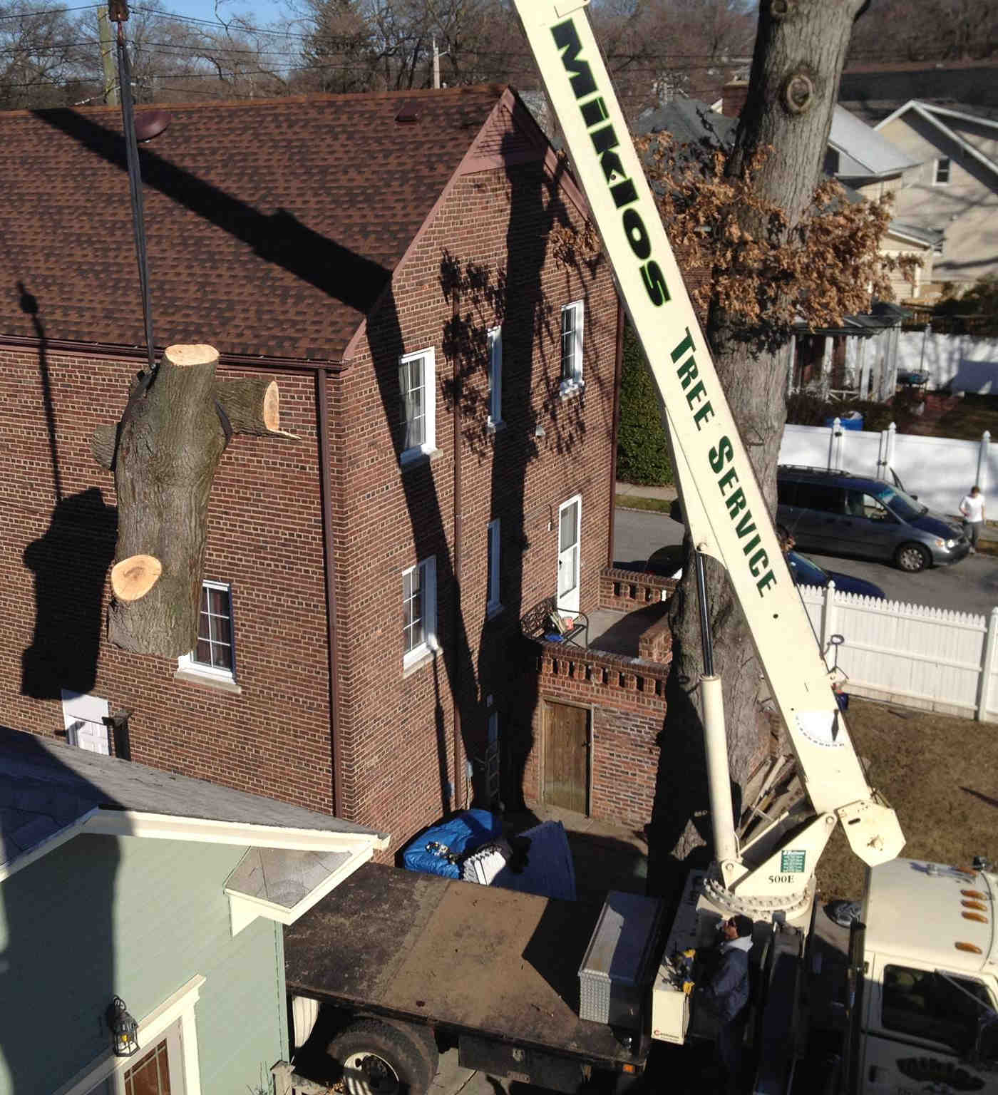 Tree removal with crane in somerset, new brunswick and princeton new jersey
