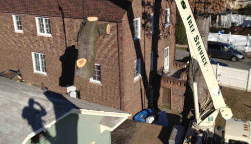 Tree Removal with crane in Somerset, New Jersey