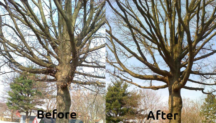 Tree Trimmung and Pruning in somerset new jersey